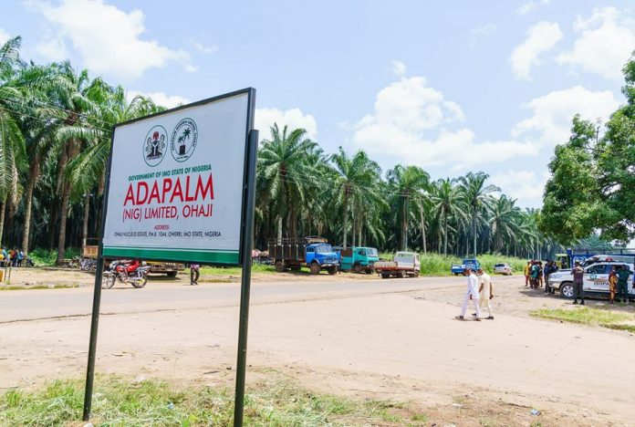 Ada Palm - Imo Govt Orders Reinstatement Of 400-Sacked Workers