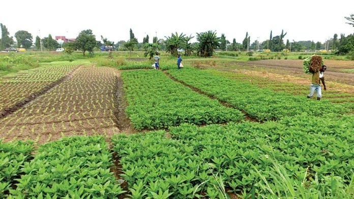 Abia - FG Signs Pact With 25 Agric Entrepreneurs On Youth, Women Training