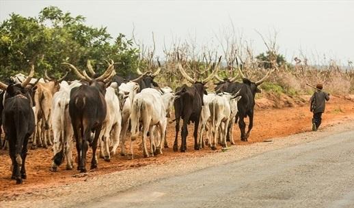 Ebonyi State Govt Bans Under Aged Herdersmen
