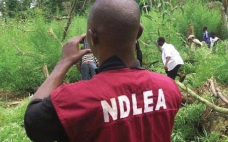Anambra NDLEA arrests 14 suspects moving hard drugs to Yobe