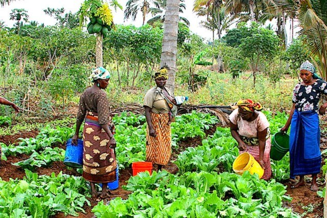 IFAD-VCDP To Support Ebonyi Farmers With Over ₦2bn For 2020 (1)