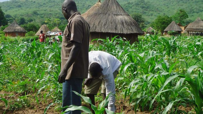 Enugu Distributes Agric Inputs To 2,000 Susceptible Farmers Today