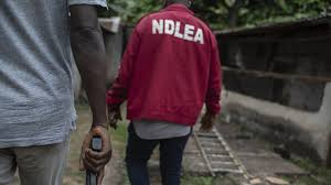 Drug Abuse: NDLEA Makes 116 arrests In One Year In Enugu