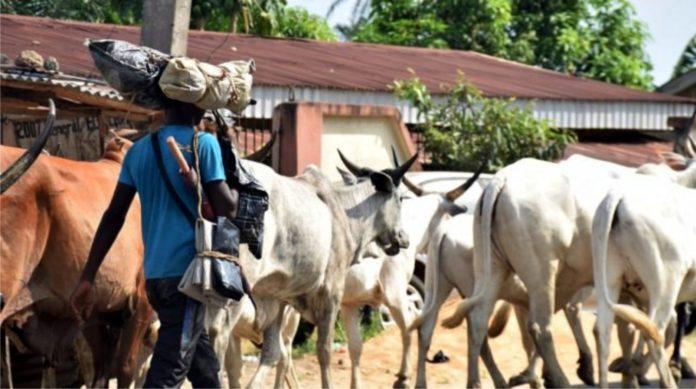 At Least 6 Killed As Herders, ESN Clash In Enugu