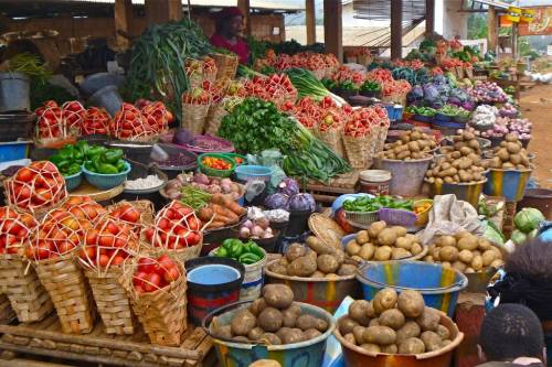 Food Blockade A Blessing In Disguise — Igbo Group