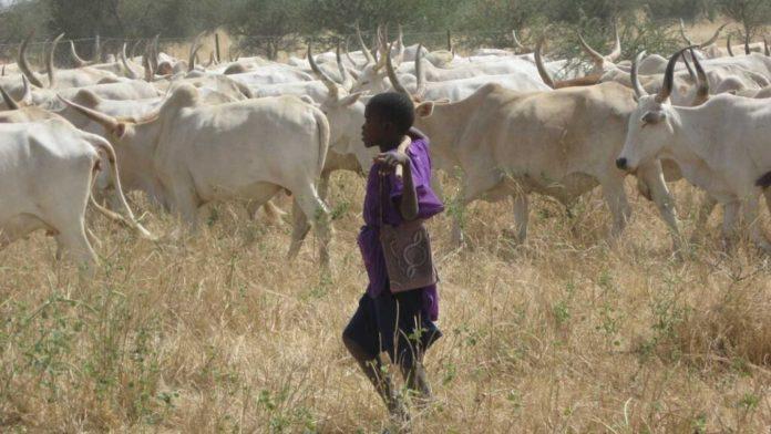 Ebonyi Herdsmen Killing Toll Rise To 52